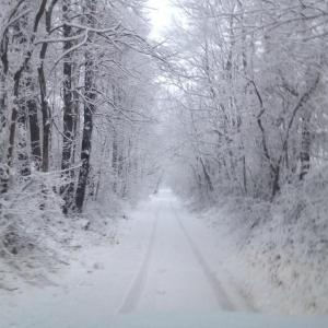 The dirt road to our home in a beautiful coating of snow...